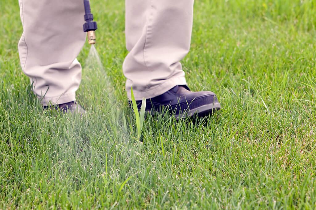 Вредители и болезни газона