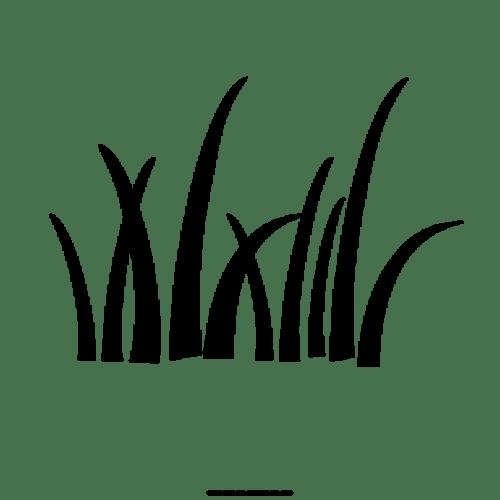 Устройство газона уход