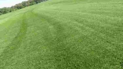 Купить рулонный газон Стандарт