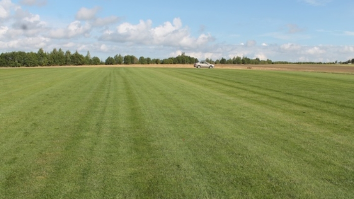 Купить рулонный газон Класика