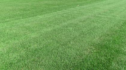 Купить рулонный газон Пикник